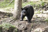 Forestia - Parc animalier - Ours